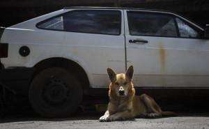 O cão fiel, montando guarda à espera do dono, que não virá
